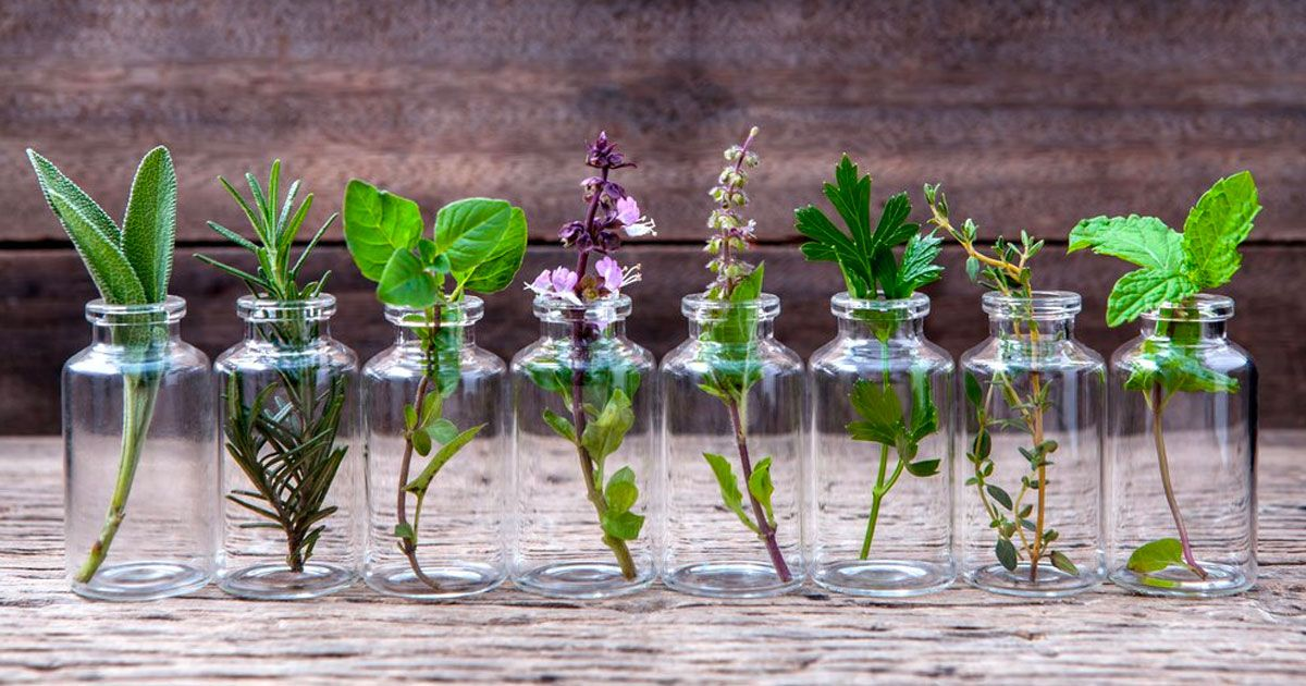 12 herbs you can grow any time of the year with just water