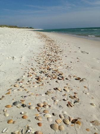 Port Saint Joe Fl Sline Shells