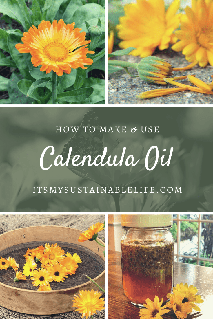 How To Make & Use Calendula Oil Calendula oil, Calendula