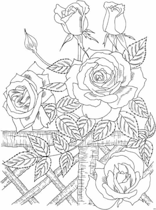 Rose Da Colorare Pagine Di Libro Da Colorare Pagine Da Colorare