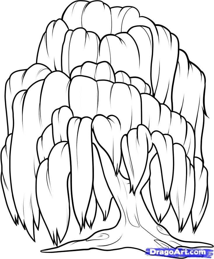 How To Draw A Willow Step 8