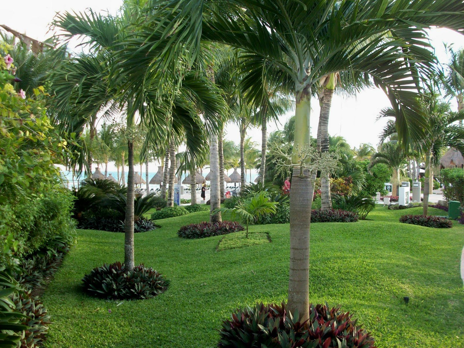 Looks like oyster plant around the base of palms garden for Landscape garden ideas pictures