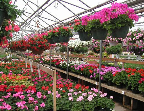 Echter S Nursery Garden Center With Images Buy Plants