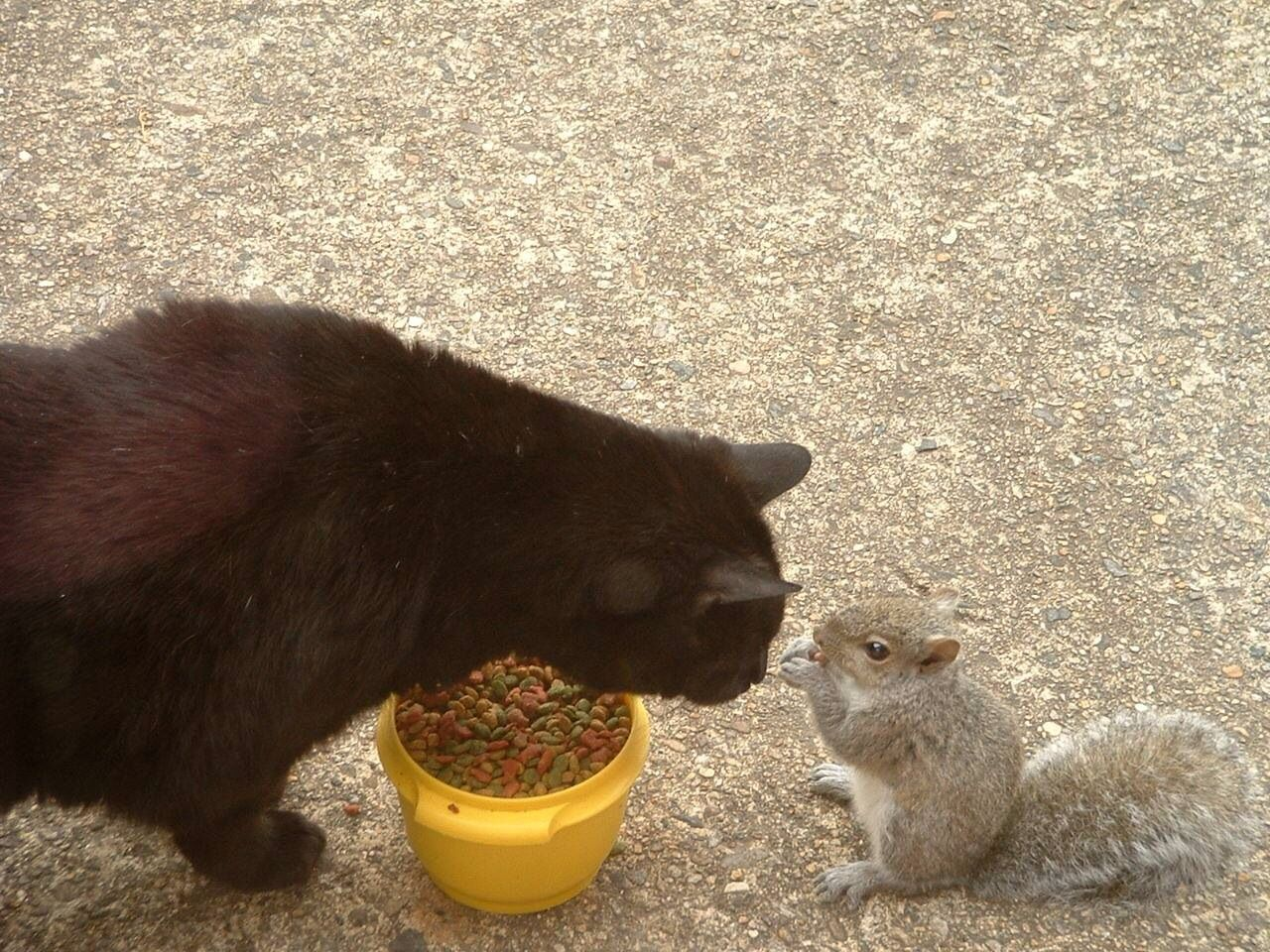 Cat and squirrel sharing food.