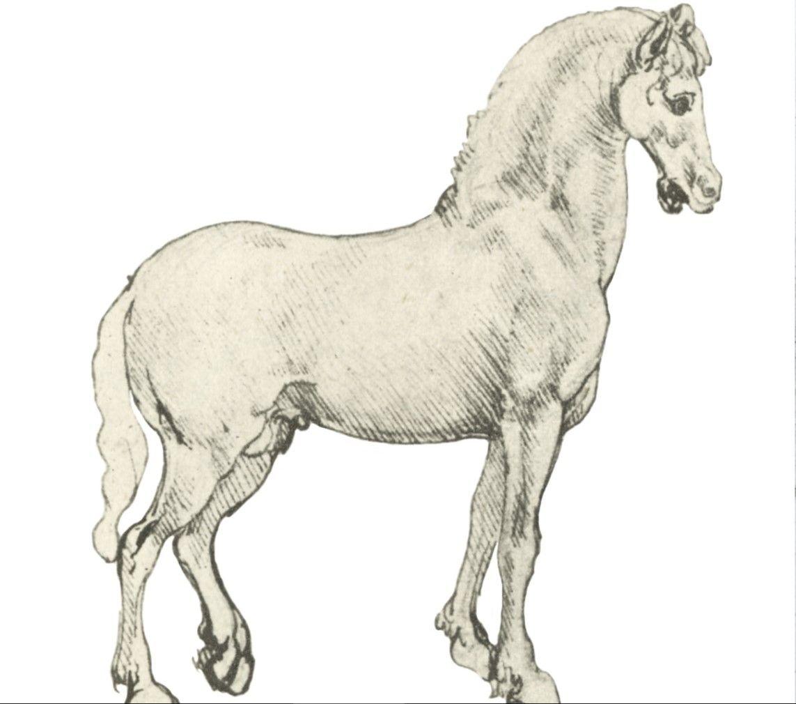 A horse standing, Leonardo da Vinci