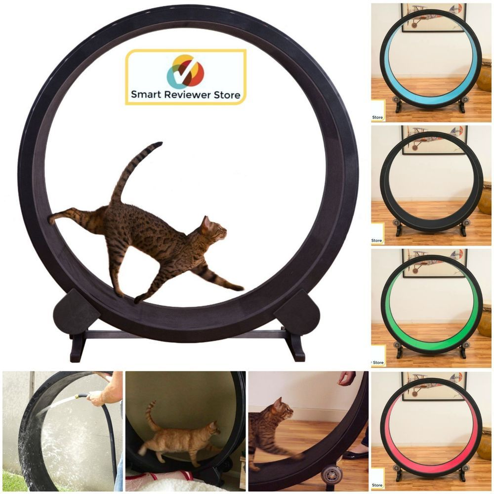 Cat Exercise Wheel Indoor Kitty Treadmill Toy Play Training Treadwheel Multcolor Generic Cat Exercise Wheel Cat Exercise Exercise Wheel