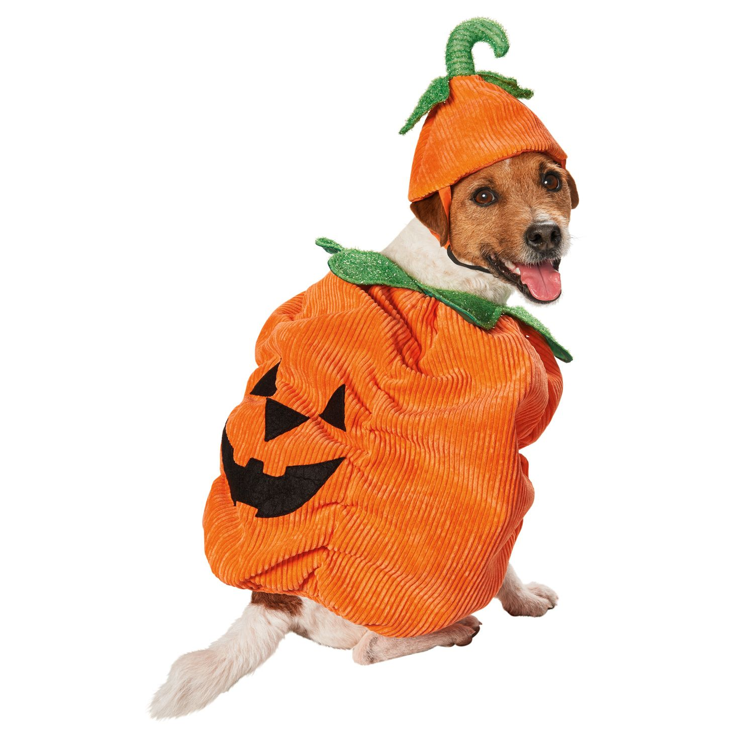 Petco Halloween Pumpkin Dog Costume Pet costumes, Pet
