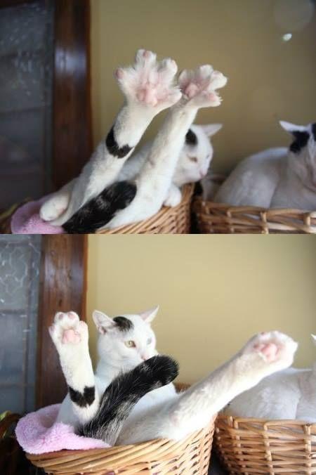 Mimi toes!!!