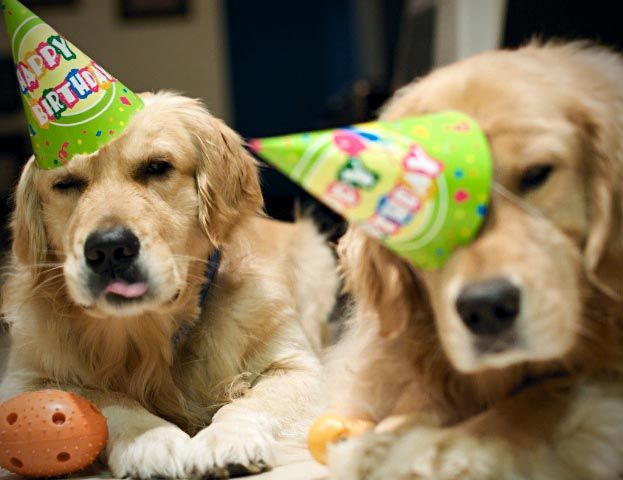 Looks Like Too Much Partying Dog Birthday Dogs Puppies