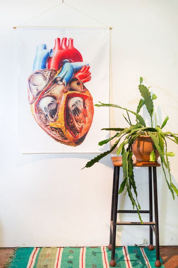 Anatomical heart wall hanging, medical gift, science gift, vintage