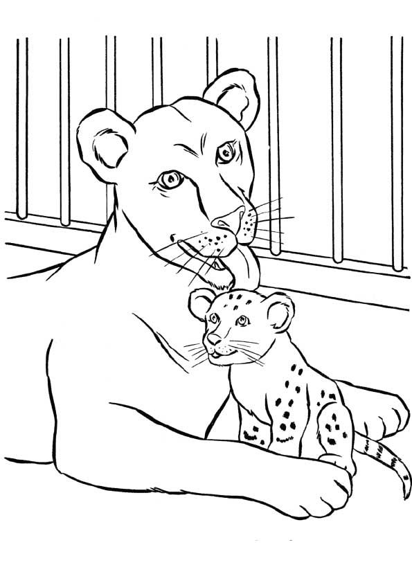 Click Share This Story On Facebook Lion Coloring Pages Zoo