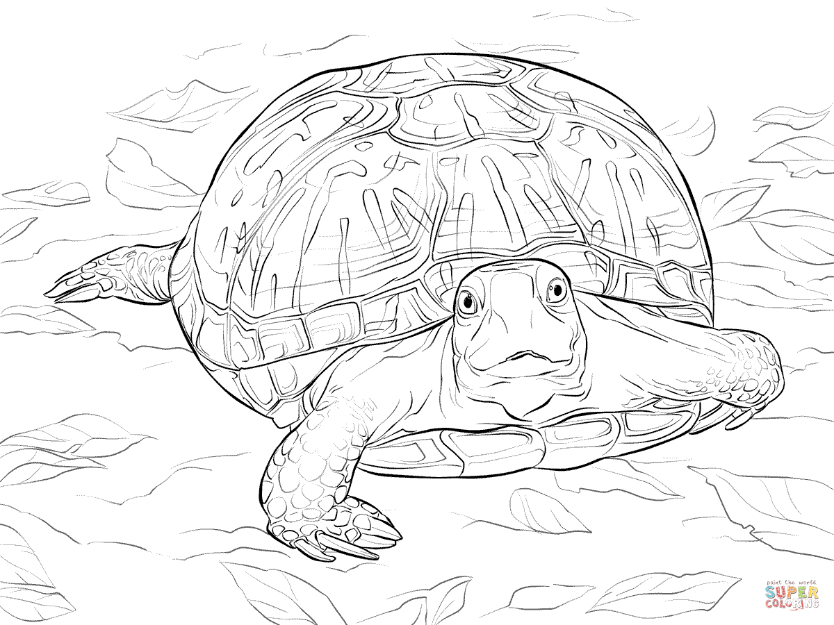 Trend Realistic Coloring Pages 10 realistic ornate box turtle