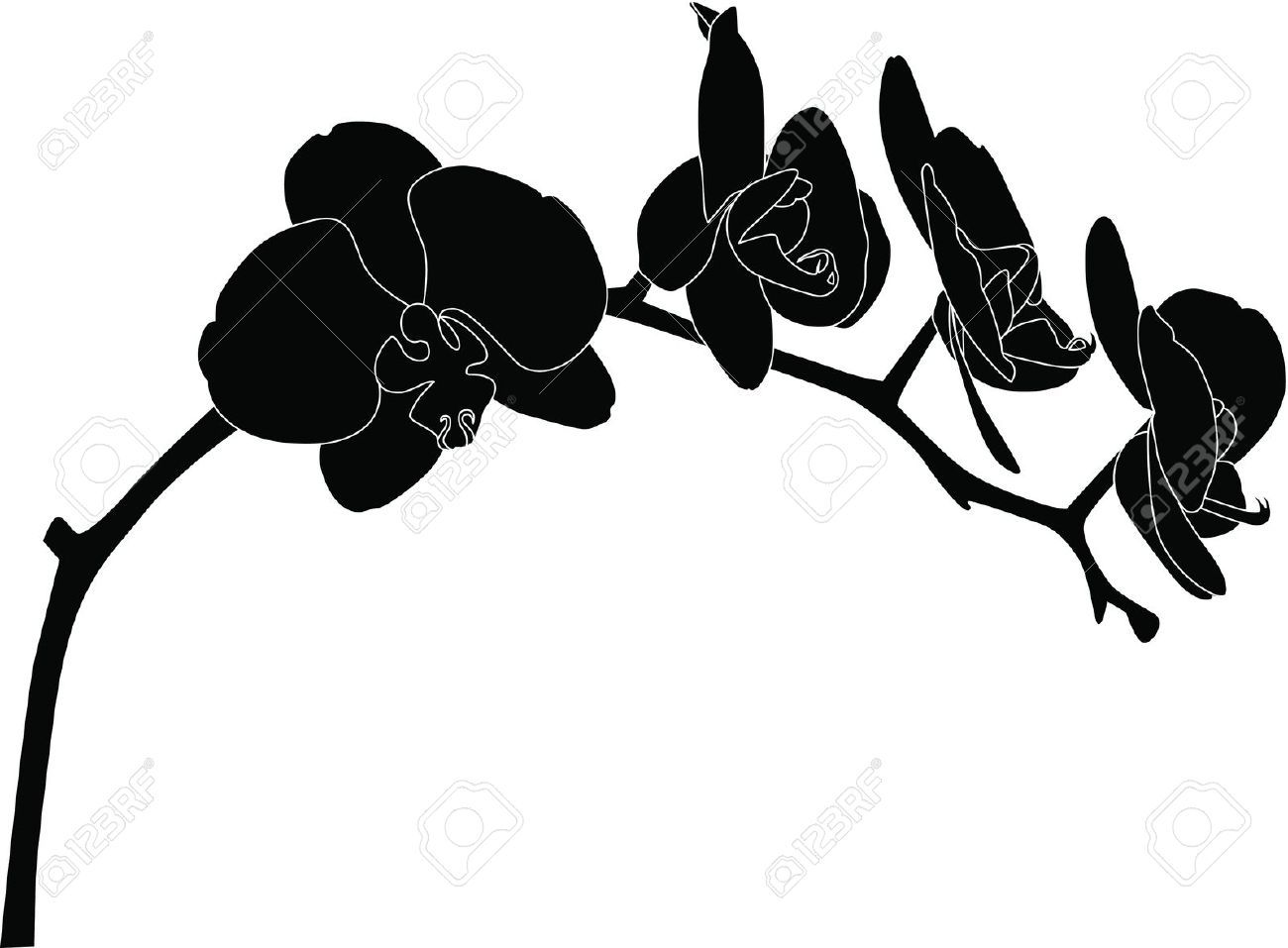Orchids Flowers It Is Isolated Royalty Free Cliparts ...