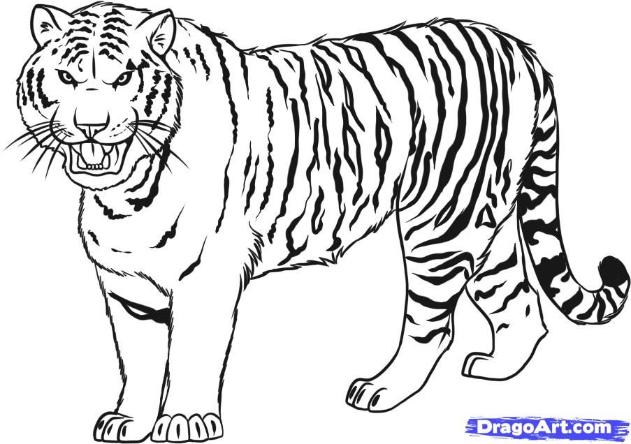 Drawn artistic tiger pictures how to draw a siberian tiger step 7