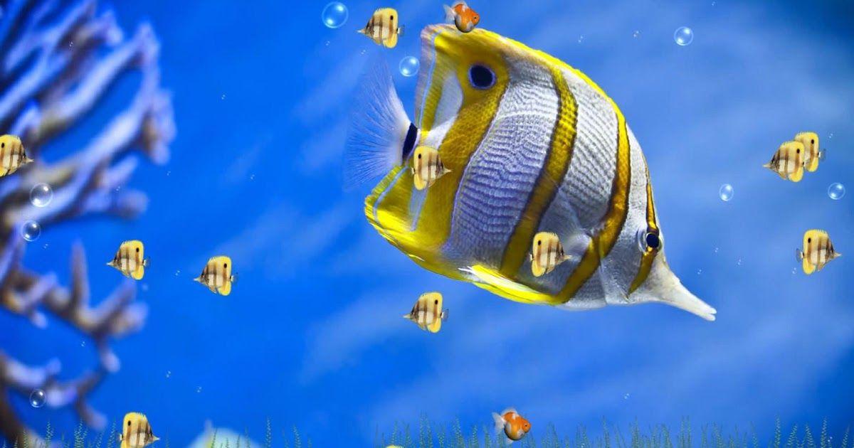 Fantastis 25 Wallpaper Bergerak Radar Download Sea Sunset Animated Software Sea Sunset Animat In 2020 Nature Wallpaper 3d Animation Wallpaper Free Animated Wallpaper