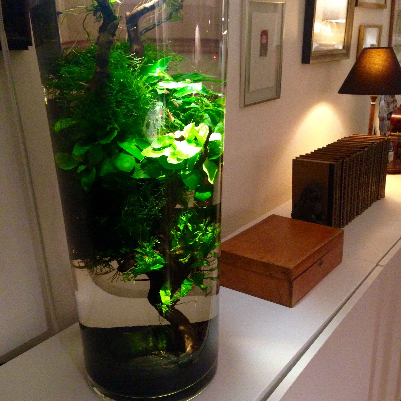 Aquascape, shrimps, vase (With images) | Aquascape ...