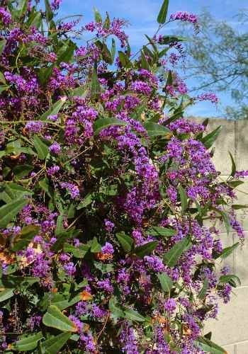 Find This Pin And More On Vines Gres Groundcovers