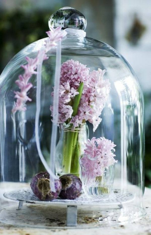 rosa hyazinthe unter glas im garten werden die blumenzwiebeln im herbst gepflanzt. Black Bedroom Furniture Sets. Home Design Ideas