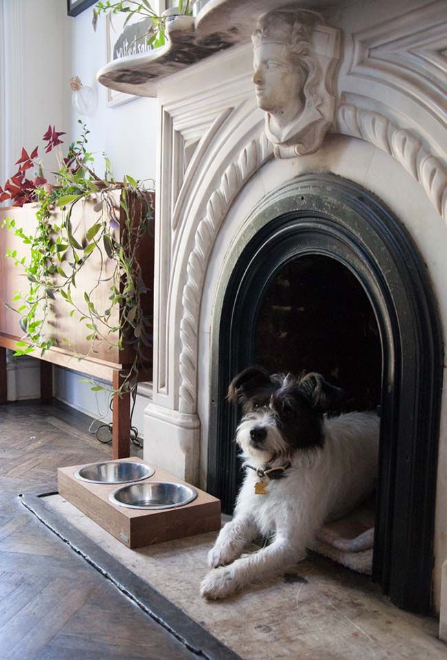 11 Ways To Incorporate Pet Spaces At Home Inside Laurel Wolf Interior Design And Style Blog Unused Fireplace Pet Spaces Dog Spaces