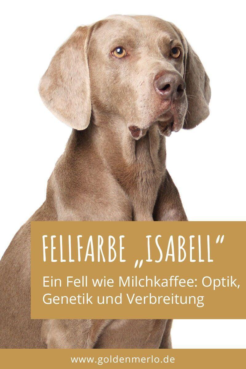Die Fell Farbe Isabell Ist Optisch Ein Helles Grau Braun Und Wird Auch Bezeichnet Als Isabella Lilac Beige Cafe