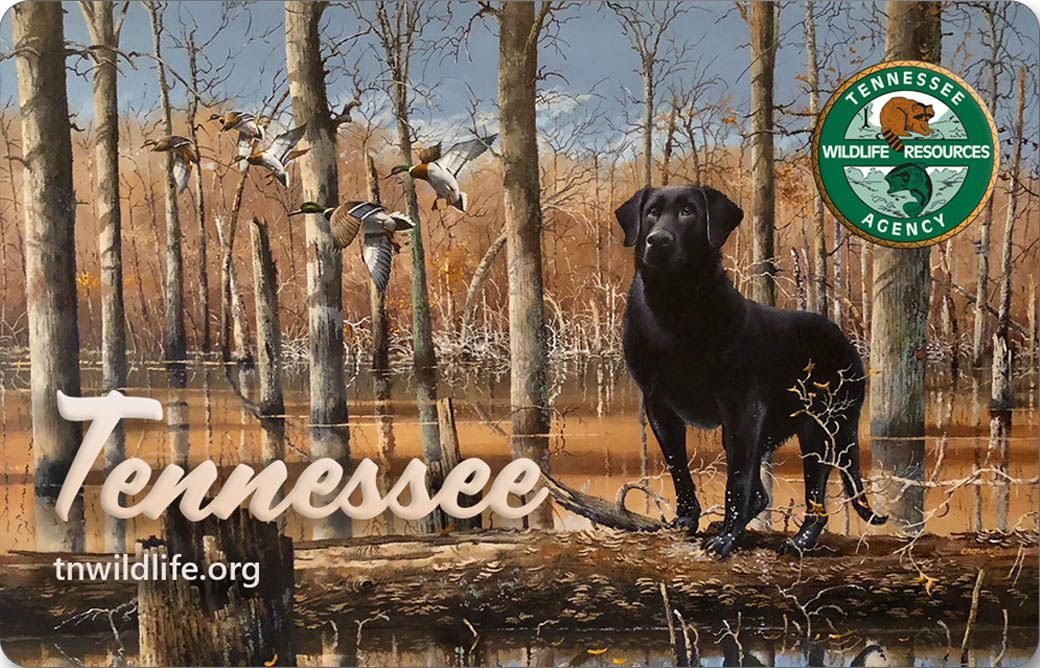TWRA announces New Artwork on Collectible Tennessee