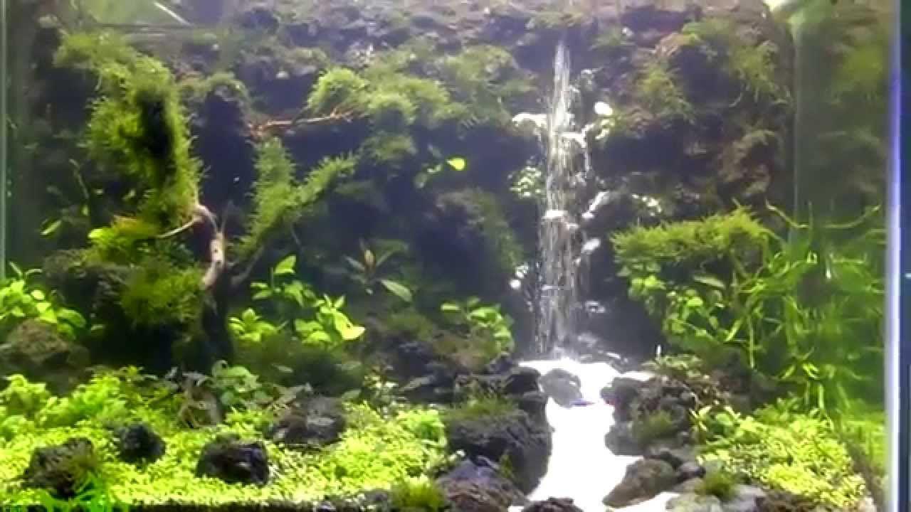 underwater waterfall aquascape natural nature