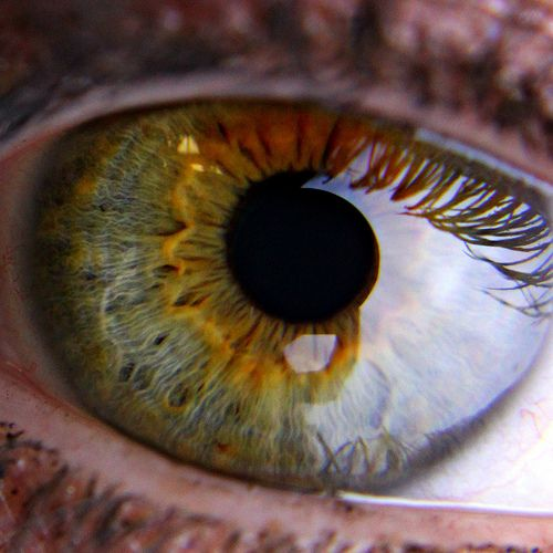 Green eye with central heterochromia - eyes creep me out when they're this close up.