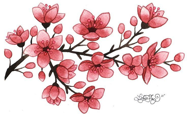 Drawing Of Small Cherry Blossoms Cherry Blossom Flower Tattoo Flower Drawing Cherry Blossom Tattoo Cherry Blossom Tattoo Meaning