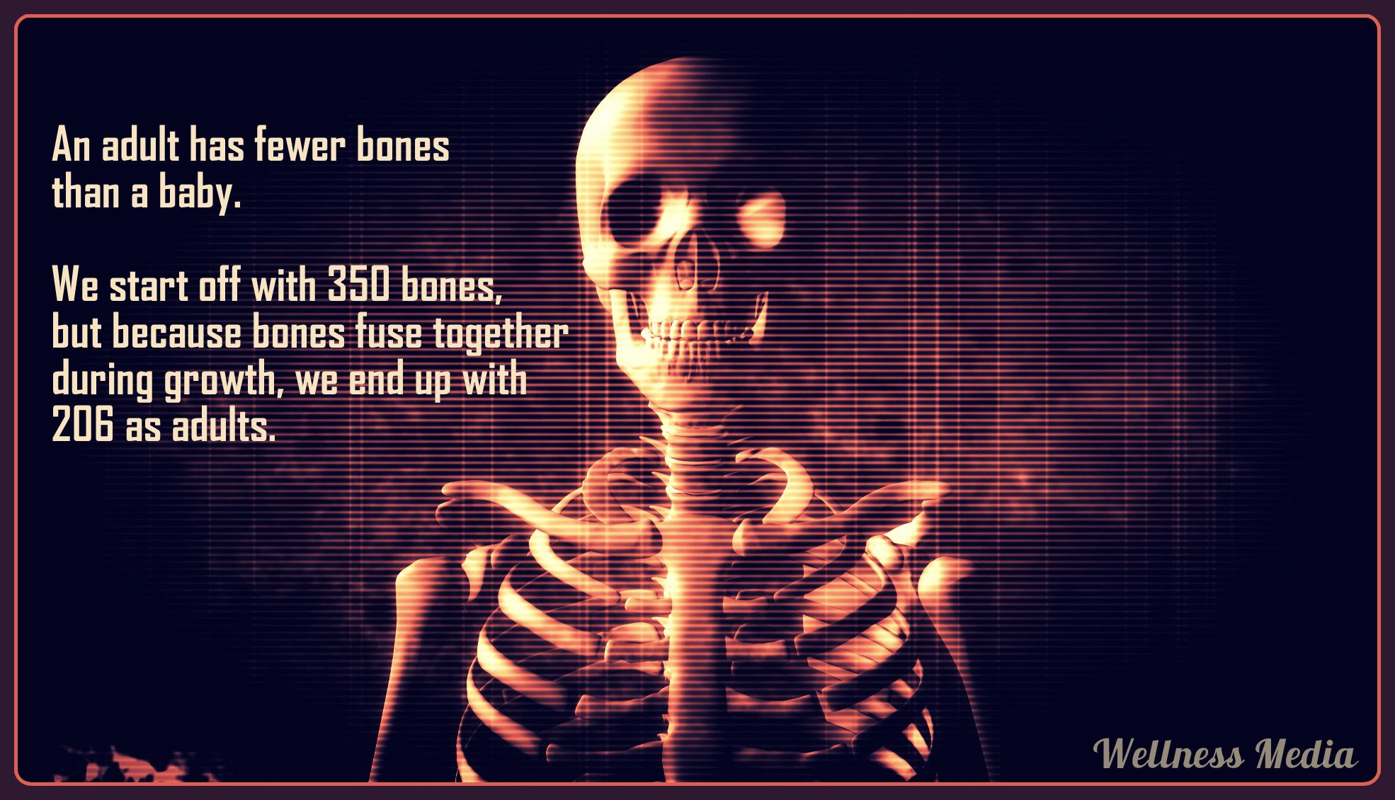 Bones Do You Lose Them As You Grow Up Not Really They