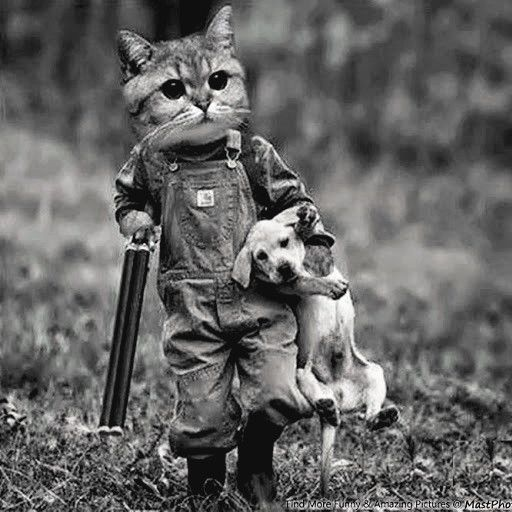 Why Hunting Is Bad For The Environment 犬のトレーニング 子猫 ベストフレンド