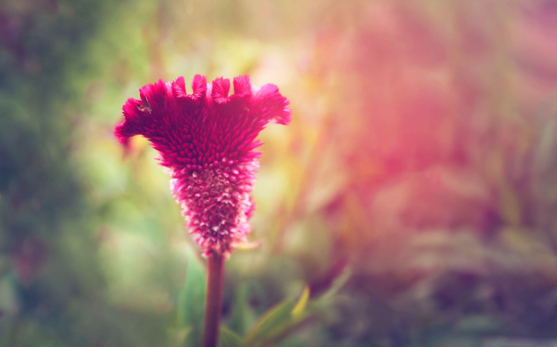 best site to flower wallpaper o oshka
