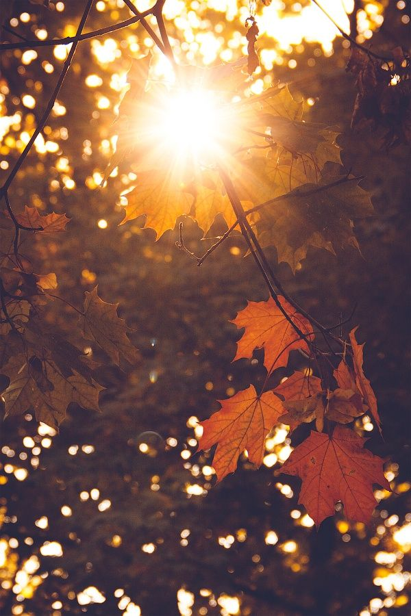 The leaves fall, the wind blows, and the farm country slowly changes from the summer cottons into its winter wools. ~Henry Beston #autumnleavesfalling