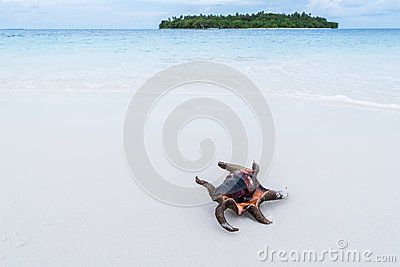 Shell, Conch spider on the summer tropical beach.