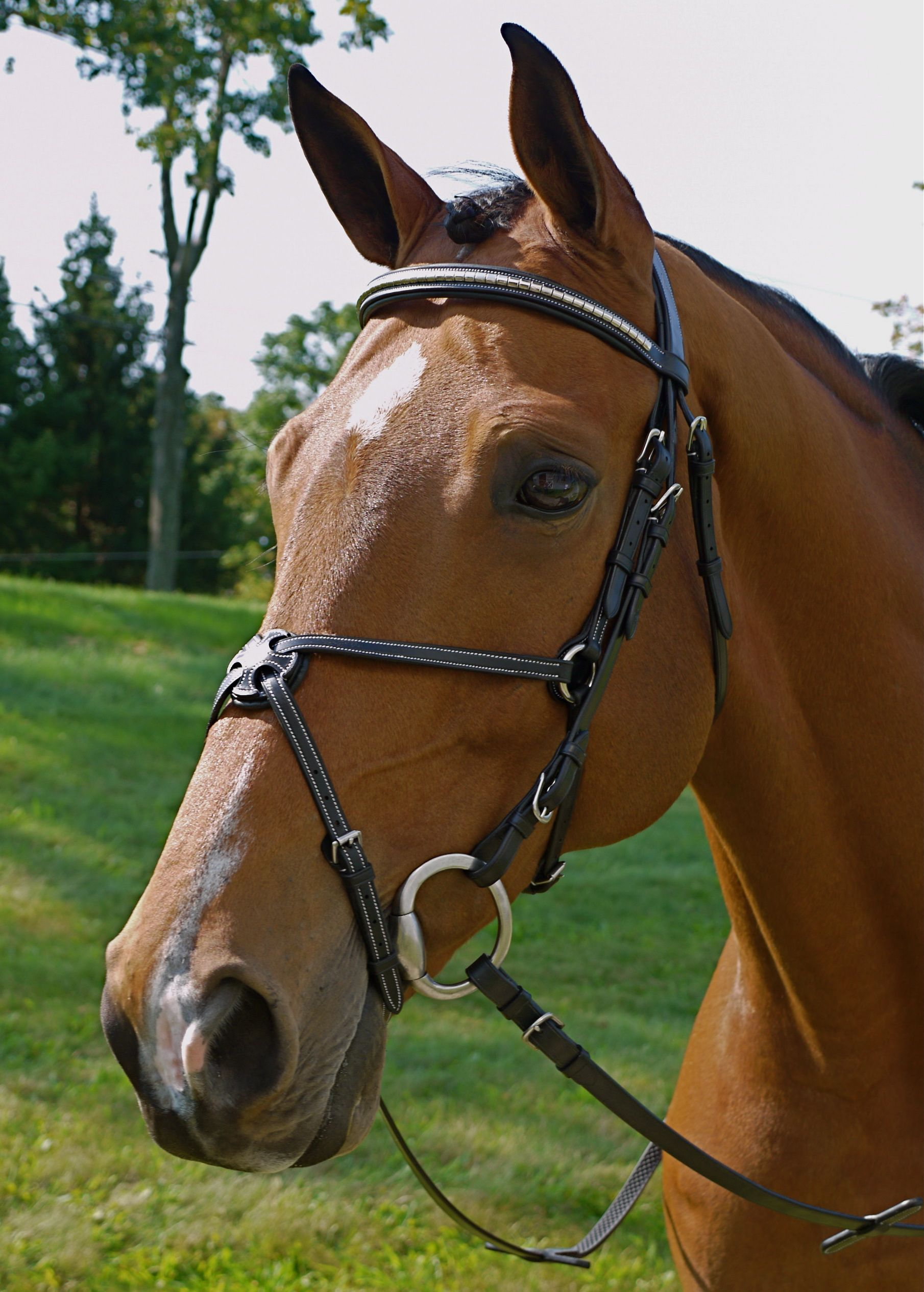kingsbury figure eight bridle make a statement with the