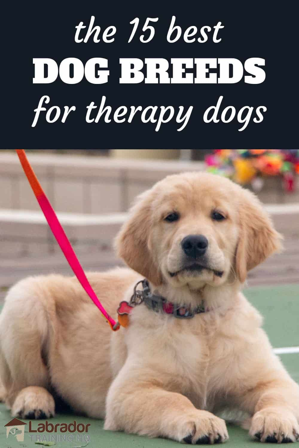 15 Best Dog Breeds For Therapy Dogs Therapy Dogs Dog Breeds