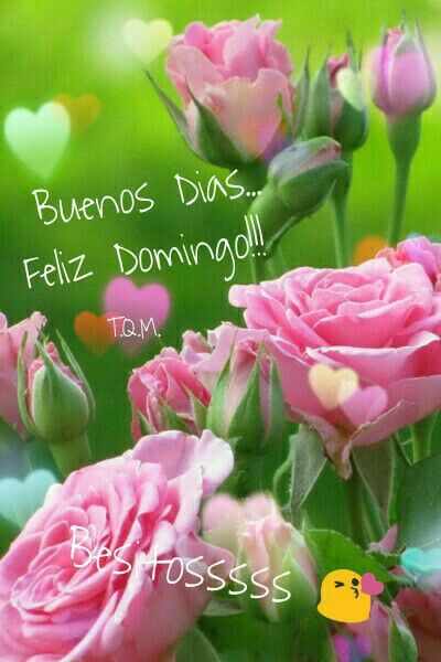 Pin by mercedes on das de la semana pinterest explore pink flowers pink roses and more mightylinksfo