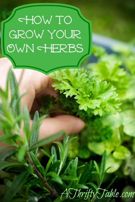 An indoor herb garden is within your reach! Herbs are remarkably hardy and tend to thrive in small spaces. And they can be very simple or elaborate. But where to start? Here are some tips on how to grow herbs indoors!