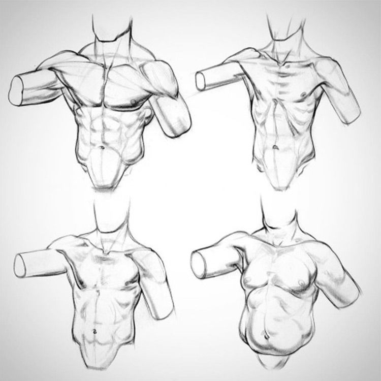 Proko Anatomy Chest Drawing Course Drawings Pinterest Drawing