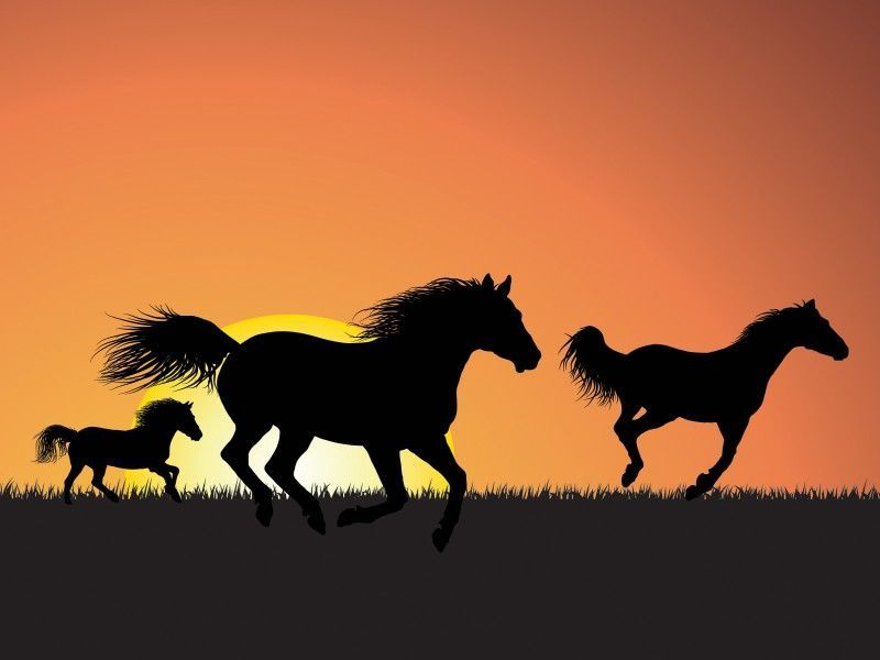 This Horses Are Running Powerpoint Background Is Composed Of A Few