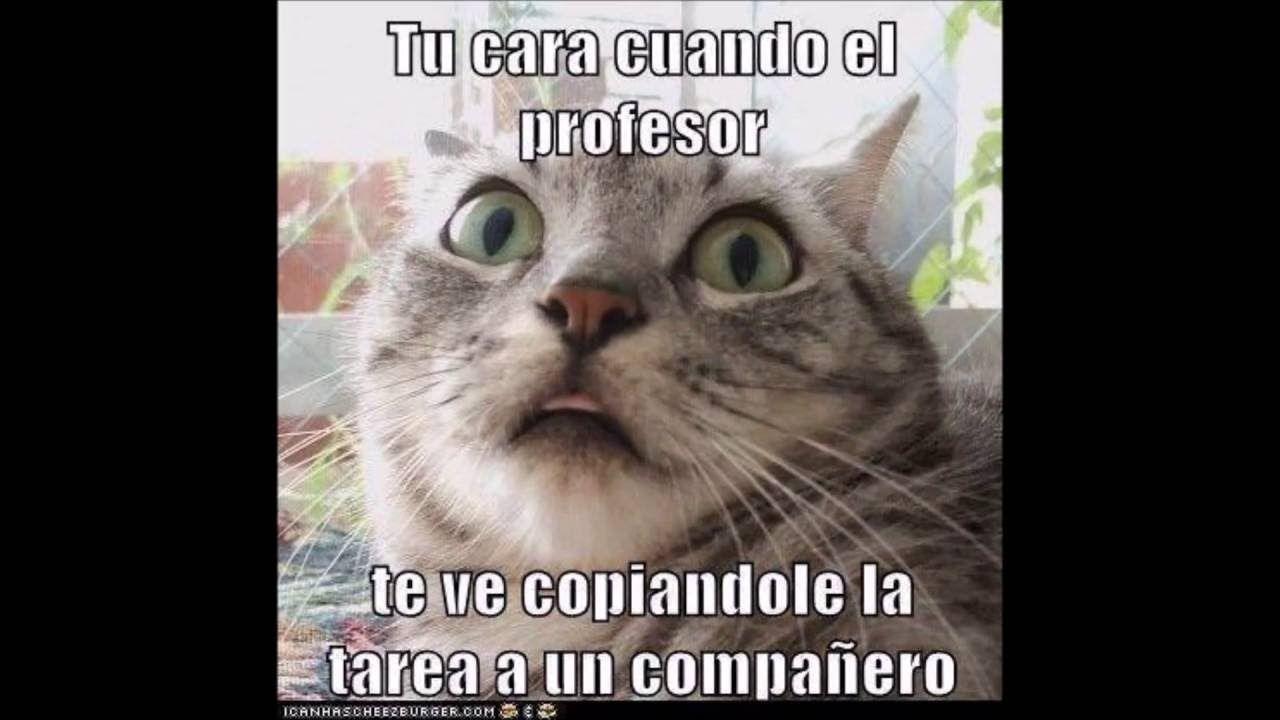 Memes Chistes Humor Funny Invequa Gato Gatos Memes En Espanol Memes De Gatos Memes Meme Gato Memes El Humor