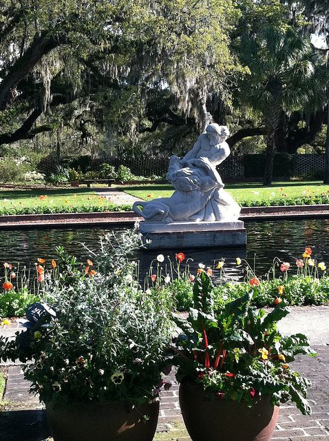Brookgreen Gardens Poppies