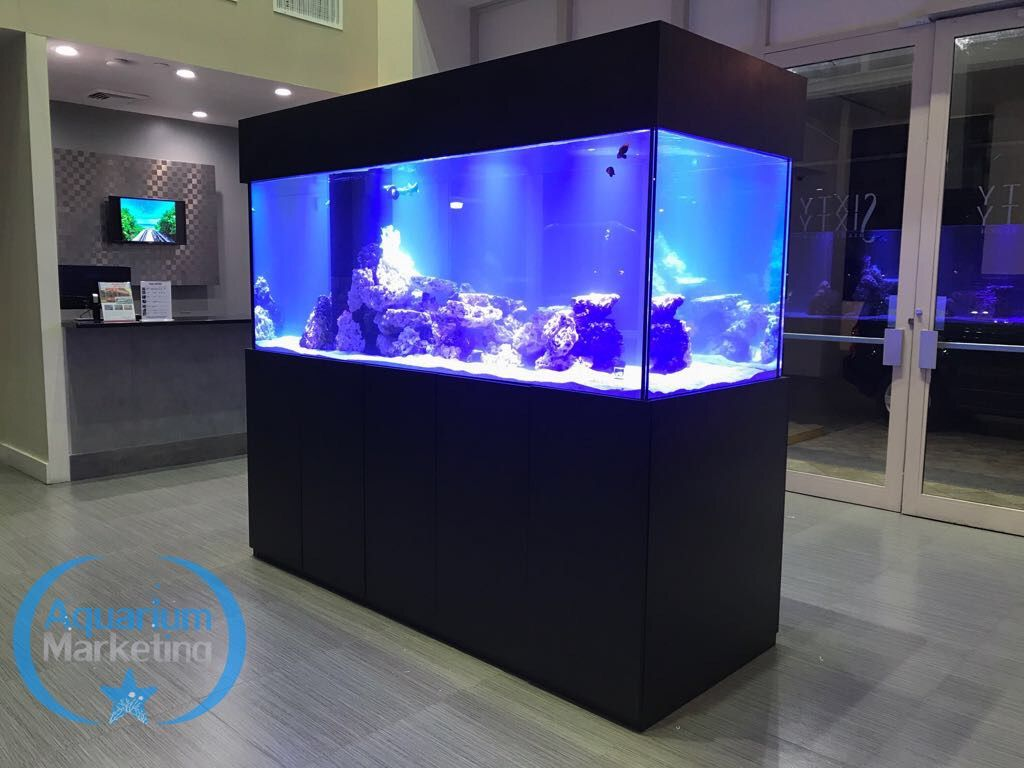 Beautiful Custom Made Aquarium For Hotel In Miami Beach Aquarium Design Home Aquarium Aquarium Marketing