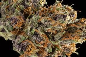 2016 SoCal Medical Cannabis Cup: Top 10 Sativa Flowers