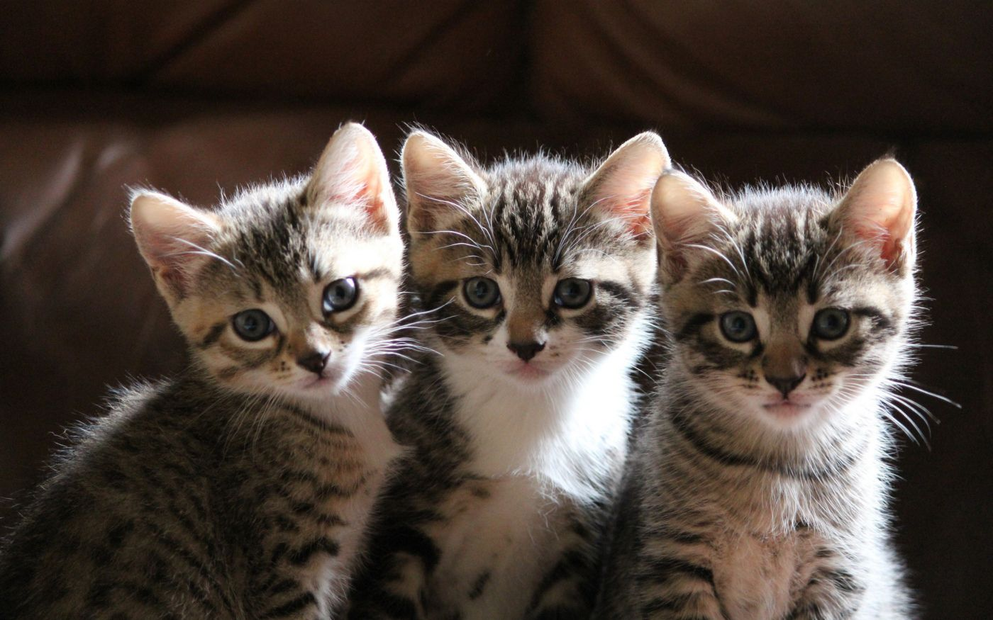 Groups Of Three Kittens Cutest Cats Kittens Cute Kitten Gif