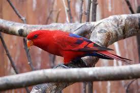 Afbeeldingsresultaat voor exotische vogels