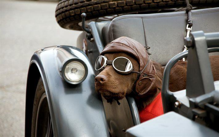 Download wallpapers brown dog, labrador, pets, bike, brown ...