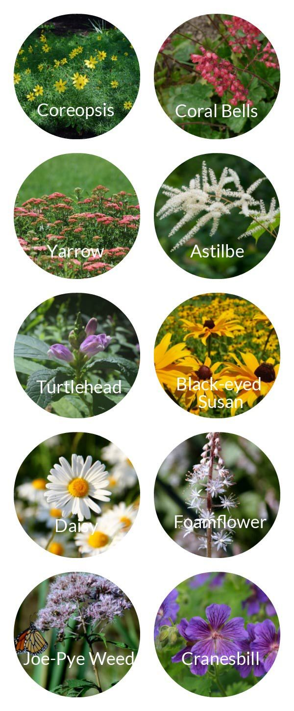 Tips for long lasting perennial blooms from spring to fall examples of long blooming perennial flowers mightylinksfo