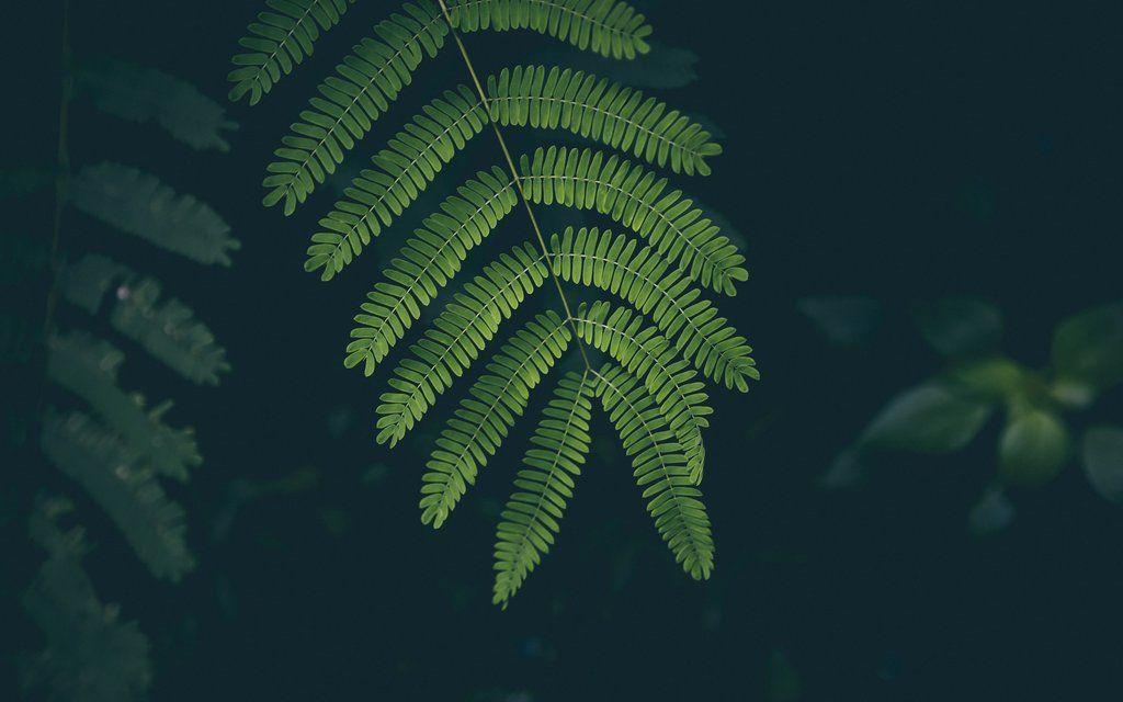 Plants Help Improve Air Quality Iphone Wallpaper Green Plant Wallpaper Nature Desktop Wallpaper