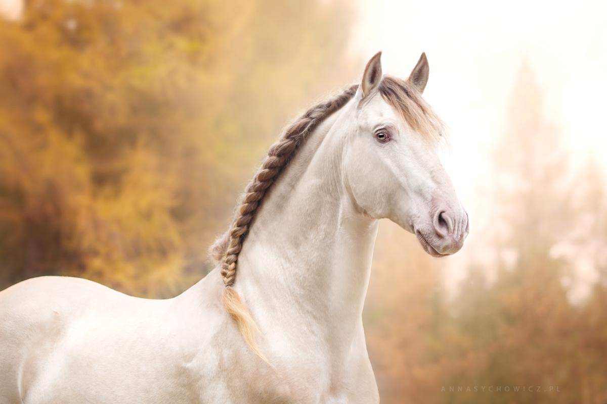 Te Propongo Un Reto 10 Ejercicios Basicos Para Principiantes Pferde Hubsche Pferde Schone Pferde