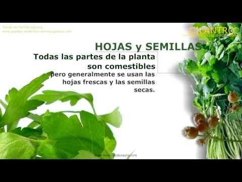 Pin En Videos De Plantas Medicinales